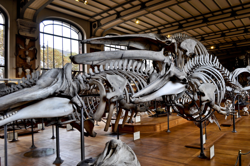 The World\'s Best Photos of anatomia and museo - Flickr Hive Mind