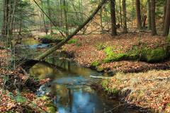Grays Run (2) (Nicholas_T) Tags: autumn trees creek forest moss stream pennsylvania creativecommons hemlocks endlessmountains easternhemlocks loyalsockstateforest lycomingcounty graysrun