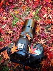 Well, I'm Back (moaan) Tags: camera digital gear momiji japanesemaple kobe utata repose 2012 fallenleaves iphone  equipments iphone5 canoneos5dmarkiii  futatabipark carlzeissmakroplanart100mmf2ze