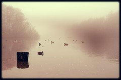 November mist (Mah Nava) Tags: november autumn sea mist nature fog germany deutschland see nebel herbst natur minimal silence ente minimalistic stille پاییز طبیعت مه دریاچه سکوت مرغابی novembermist