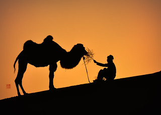 F_DSC2078-吃些早餐吧-Have some breakfast-日出-Sunrise-駱駝-Camel-沙漠-Desert-鄯善-Sansan-新疆-Xinjiang-中華人民共和國-Peoples Rep of China-Nikon D90-Nikkor 24-120mm