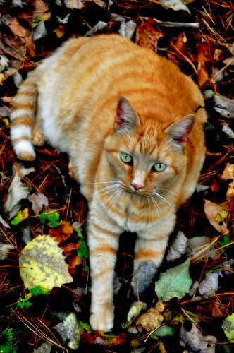 Remo in the fall leaves!!