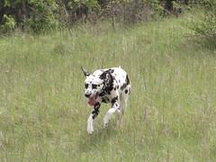 kimi (germancute) Tags: dog pet hund