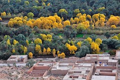 Marokko (bayernphoto) Tags: africa autumn fall desert herbst foliage oasis morocco atlas maghreb souk afrika orient markt essaouira marokko fes kasbah nomade marrakesch oase wueste moschee gewuerze marokkaner gauklerplatz koenigsstaedte