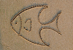 fish on sand ([s e l v i n]) Tags: india fish beach sand bombay mumbai versova versovabeach ©selvin fishonsand fishonbeach