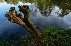 Tree Stump by the Lake (blinkingidiot) Tags: tree reflections stump hollowtree universityofnottingham highfieldpark mygearandme blinkagain