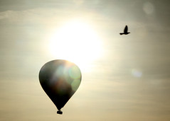 Lift (likrwy) Tags: sky bird freedom hotair balloon flight free contrejour