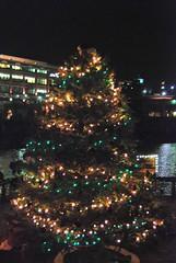 The TD Bank Christmas Tree
