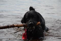 tidoe (Craig Waythomas) Tags: lac matagami fetch baie james quebec boreal ecogitedelacmatagami