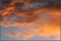 Sky Sensation (bigbrowneyez) Tags: sunset awesome sensational fabulous birds flying moody amazing cool striking stunning warm vibrant colourful special remicrapids high cielo alto uccelli nuvole nature natura frame cornice fantastic