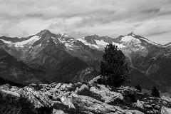 Schwarzenstein und Groer Lffler (Frick Turnerstick) Tags: sdtirol altoadige italien italy ahrntal alpen gebirge berg mountains gipfel summit zillertaleralpen