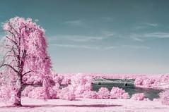 20160908-FD-flickr-0036.jpg (esbol) Tags: ir infrared infrarot nir