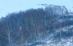 DP1U2102 (c0466art) Tags: 2015 chinese inner mogonlia grassland winter season trip travel early morning sunrise momemt cloudy blue tone mountain white snow world cold weather beautiful landscape scenery trees light canon 1dx c0466art
