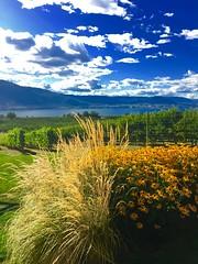 The view from the Ruby blues winery (Jamie Kerr) Tags: landscape scenery okanagan lake mountains hills grass grapes vineyard wine winery rubyblueswinery canada britishcolumbia naramata penticton