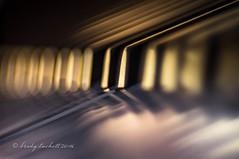 D# (brady tuckett) Tags: meyeroptikgrlitztrioplan100mmf28 meyeroptikgrlitztrioplan meyeroptikgrlitz meyer grlitz 100mm bradytuckett brady tuckett trioplan bokeh nature macro light color colors m42 macros photosynthesis m42lenses m42mount piano keyboard keys abstract d