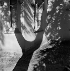 shadow (Don Jackson) Tags: wall shadow monochrome tree corner