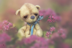 button does not like pink (rockinmonique) Tags: button mini teddybear tiny toy cute sweet flower pink yellow grumpy moniquew canon tamron copyright2016moniquewphotography ton