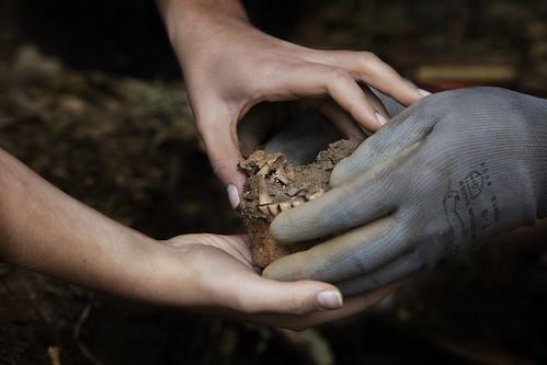 Exhumación As Covas (Lugo) (7)