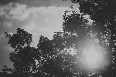 Just the sun through a tree (Daniel A Ruiz) Tags: blackandwhite tree sky could sun project365