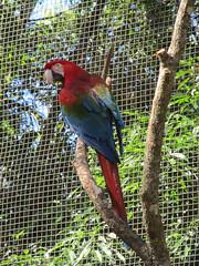 """Le Parc des Oiseaux d'Iguaçu: la grande volière aux perroquets <a style=""""margin-left:10px; font-size:0.8em;"""" href=""""http://www.flickr.com/photos/127723101@N04/29607985806/"""" target=""""_blank"""">@flickr</a>"""