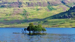 Loch Arklet Island 2 (brightondj - getting the most from a cheap compact) Tags: thirdwalkscotlandwaterlochloch arklet landscape trossachs