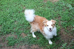 Come On and Play! (eyriel) Tags: dog pet friend pov nature