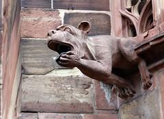 Strasbourg-2016-02-13-041 (Sambaphi) Tags: strasbourg alsace cathdrale cathedral sculpture gargouille gargoyle