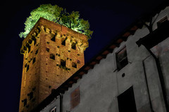 Tower with a Wig (Don Csar) Tags: lucca italy italia europa toscana tuscany europe torre tower tree arbol cima arriba top night noche peluca