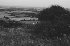40310036 copy copy.jpg 1 (leilawenban) Tags: 35mmfilm 35mm filmphotography olympus filmisnotdead analog filmpictures blackandwhite southdowns sussex devilsdyke southeast england hills view landscape nature adventure explore