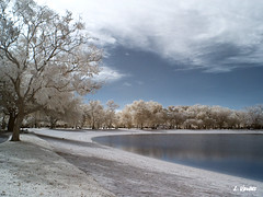 False Color IR (LValdes) Tags: park lake photoshop florida miami canong3 hialeah irconverted channelsswapped lvaldes