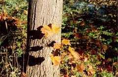 Minolta_011_31 20121013_13 Höst (Anders Wahlbom) Tags: autumn stockholm scanned kista shotonfilm minoltadynax5 kodakportra400
