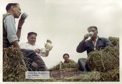 Blast from the past - Hay Making 1961 (doublejeopardy) Tags: cheshire 1961 haymaking allostock rudheathcottage