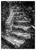 San Biagio Steps (Dit49) Tags: italy texture monochrome stairs blackwhite steps stairway nikoncoolpix8800 maratea sanbiagio niksilverefexpro