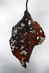 2012 11 04_d5000_0037 (swedgatch) Tags: autumn macro art fall nature beautiful beauty by photography prime photo nikon photographer angle artistic photos sweden perspective photographs photograph tamron 90mm d5000 swedgatch