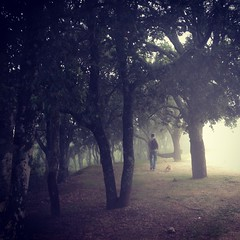 Nel bosco (Isabella Pirastu) Tags: sar bosc boscosardegnawoodcanedogsardegnasardinia