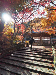 worship in autumn (k n u l p) Tags: autumn fall leaves maple kyoto shrine olympus  kameoka zd  kuwayama 918mm  epl5