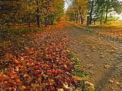 Autumnal Walk (Rob Felton) Tags: autumn trees leaves bedford bedfordshire autumncolours felton cycletrack autumnal willington robertfelton bedfordrivervalleypark nationalcycleroute51