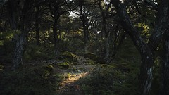 Hidden Trail (fksr) Tags: california trees sunlight forest moss trail marincounty mounttamalpais