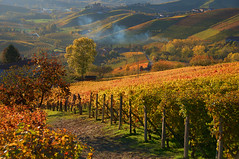 the valley of wine (rinogas) Tags: italy castle vineyard wine alba hills piemonte cuneo langhe photomix grinzanecavour dianodalba rinogas bestevercompetitiongroup bestevergoldenartists langhehills