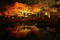 Night view of Entsu-in Temple, Matsushima (Parmanand Sharma) Tags: autumn nature water japan colorful nightview matsushima tohoku