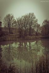 Durağan (oskaybatur) Tags: november trees sky lake water turkey reeds season leaf pentax türkiye saturday türkei divorce sephia stable kasım bolu immobile pessimistic sonbahar justpentax pentaxart pentaxkr sigma1770f284dcmacrooshsm tokadihayrettin