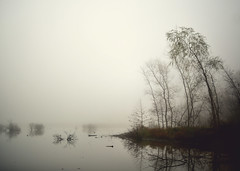 silence (amy buxton) Tags: trees lake water fog nikon stlouis wetlands crevecoeurlake meteorology missouririver floodplain d600 amybuxton november212012