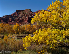 The View from Duncan's Retreat (James L. Snyder) Tags: morning november autumn red usa sunlight mountain southwest tree fall leaves yellow rock horizontal rural river gold golden early utah sandstone warm butte glow natural bright native vibrant branches country sunny bluesky 2006 brush fresh cliffs foliage formation clear ridge crisp wash riverbed cottonwood ghosttown ravine zion rough cloudless bluffs deciduous knoll monolith bushes shrubs brilliant sedimentary rugged precipice waterway gleaming riparian outstretched virginriver sidelighting gully eroded coarse coloradoplateau gooseberrymesa washingtoncounty fremontcottonwood populusfremontii mukuntuweepcreek duncansretreat