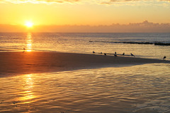 Here comes the sun #3 (larigan.) Tags: sea seagulls sunrise sand horizon seashore englishchannel bexhill larigan phamilton