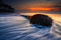 Tree of Motion (eggysayoga) Tags: longexposure sea bali motion tree beach water sunrise indonesia dead nikon coconut tripod ss hard wave tokina 09 lee nd bluehour goldenhour pantai graduated neutraldensity 1116mm manyar d7000