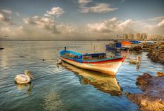 Pelican Time (Nejdet Duzen) Tags: city trip travel sea cloud bird turkey boat view trkiye pelican pelikan deniz sandal izmir bulut ku manzara photomix turkei seyahat ehir maviehir mygearandme bestevergoldenartists