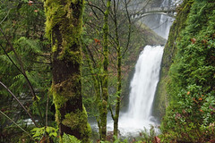 Multnomah Falls (Lower Tier) (Ian Sane) Tags: bridge trees green nature rain 30 oregon forest river landscape ian photography foot moss woods highway columbia images falls historic route gorge lower wilderness ferns benson multnomah tier sane