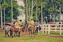 Rio Grande do Sul é aqui, tchê! (Taís S. Bordignon) Tags: brazil horse brasil cavalos rs ctg riograndedosul piquete tradicionalismo rodeio tradição gado cachoeiradosul gineteada ginete centrodetradiçõesgaúchas laçadores