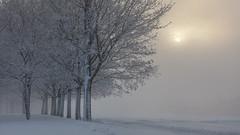Rime morning (Ulf Bodin) Tags: winter sun mist snow tree ice sol fog is vinter frost sweden uppsala sverige rime snö träd dimma rimfrost uppsalalän canoneos5dmarkii salabackar canonef70200mmf28lisiiusm