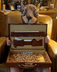 Portrait of a Man Wearing a Squirrel Mask With a Briefcase Full of Nuts in His Lap (ricko) Tags: selfportrait squirrel mask briefcase peanuts nutcase werehere